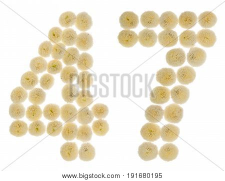 Arabic Numeral 47, Forty Seven, From Cream Flowers Of Chrysanthemum, Isolated On White Background