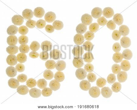 Arabic Numeral 60, Sixty, From Cream Flowers Of Chrysanthemum, Isolated On White Background