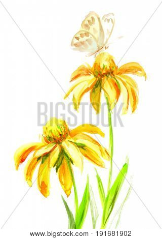 Echinacea yellow flower with butterfly on a white background. Watercolor drawing illustration