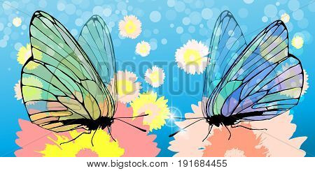 Butterflies Collect Pollen From The Flower