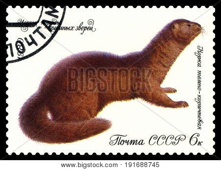 STAVROPOL RUSSIA - April 02 2017 : A Postage Stamp Printed in the Russia Shows Mink dark brown circa 1980