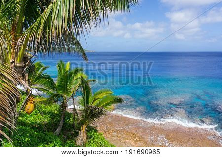 Tropical scene coral reef in turquoise water below palm trees and fronds swaying in breeze over ocean distant horizon.