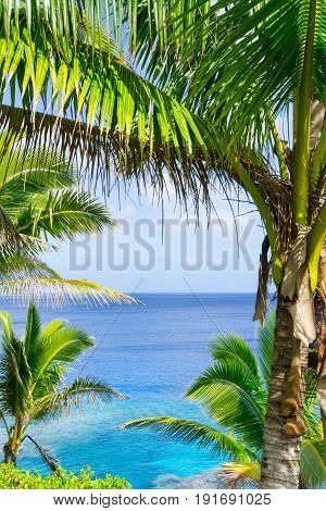 Tropical scene turquoise and blue ocean framed by palm trees and fronds swaying in breeze over ocean distant horizon.