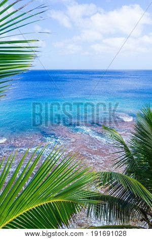Vertical tropical scene palm trees and fronds swaying in breeze over coral reef and ocean distant horizon and below sky.