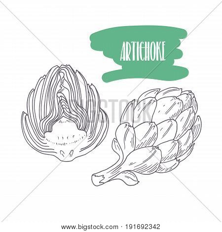 Hand drawn artichoke isolated on white. Sketch style vegetables with slices for market, kitchen or food package design. Vector illustration