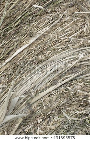 Closeup of golden hay roll circular haystack showing straw texture. Vertical