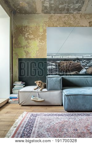 Room in a loft style with shabby walls and a parquet on the floor. There are multicolored sofas, carpet and pile of books on the floor, big photo on the wall. Small dog plays with a sneaker. Vertical.