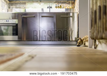 Nice puppy lies on the floor in the luminous kitchen in a loft style with shabby and brick walls. There is an oven, chrome steel lockers, sink, shelf with bottles and glasses. Closeup. Horizontal.