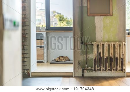 Loft style interior with shabby and brick walls and a parquet on the floor. Puppy is sleeping on the gray pillow under the wooden table with lockers. Canvas is hanging on the wall over the radiator.