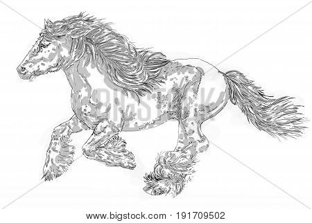 A galloping long-haired horse that runs ,