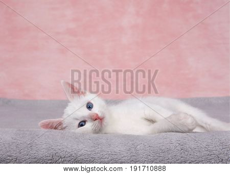 Small fluffy white kitten laying on a fluffy gray blanket looking directly at viewer. Textured marbled pink background. Copy space