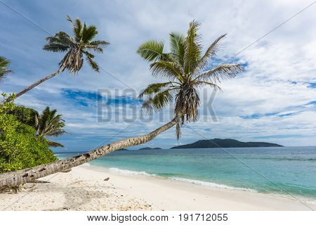 Beautiful palm tree over the beach Anse Banane, La Digue island, Seychelles.