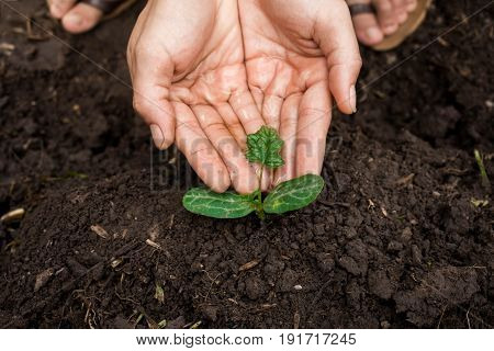 Young man's hands planting tree sapling, Reforest to save the world.