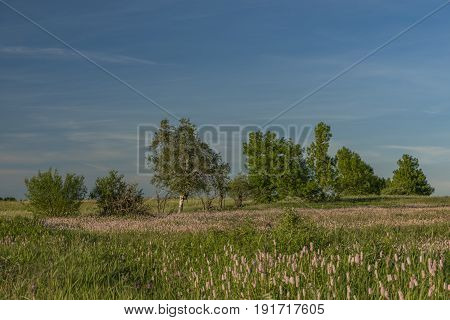 Flower meadow in Krusne hory mountains in spring evening