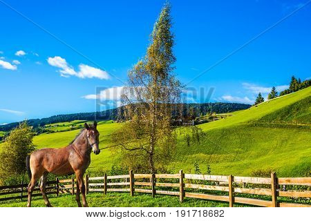 Charming rural landscape in the Dolomites. Sleek horse grazing in the grass. Magnificent summer sunset in Tirol. The concept of eco-tourism