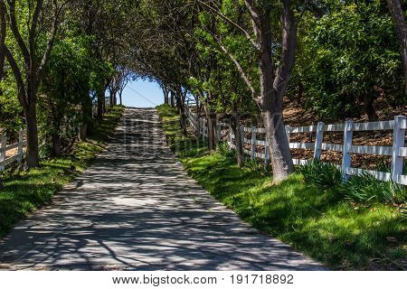 Shady path with white fence, shadows and trees