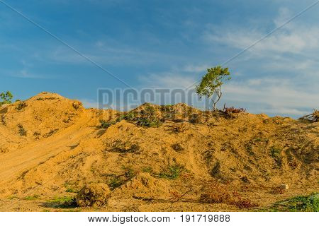 Single tree standing on a barren hill with a blue sky in the background.