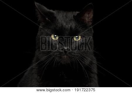 Portrait of Curious Black Cat with annoyed face on Isolated Dark Background, front view