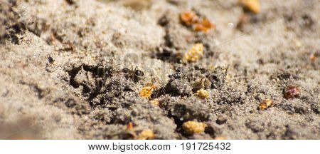Close-up of ants exploring sand spot in the woods