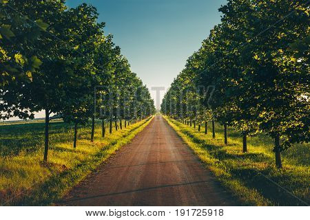 Direct Road With Rows Trees Left And Right One Point Perspective Horizon Picturesque Rural Landscape