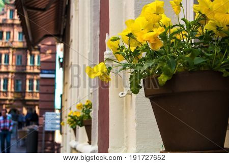 A Pot With Yellow Pansies At The Window Sill Of An Old House At Old Town Of Heidelberg, Germany.