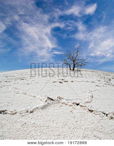 Lifeless tree in the salt desert under blue sky