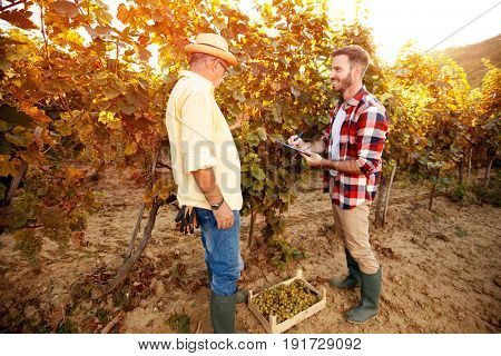 Vintner inspecting vine in vineyard, research vine concept