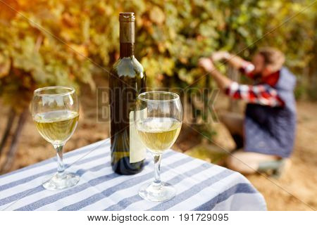 White wine in wine glass product of grape background