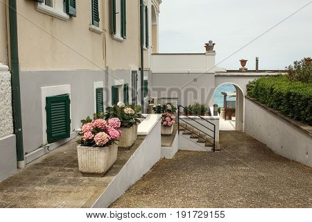 White Flowerpots With Pink Flowers Stand Beneath Grey Wall