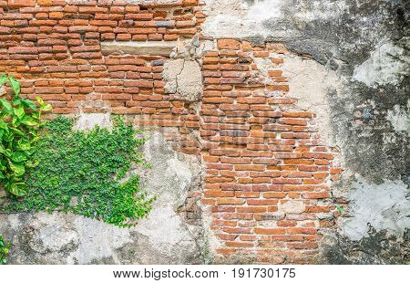 Vintage background The old wall is show detail of brick in long time ago. and a small plant is grow up on the wall. Abstract wallpaper with vintage filter.