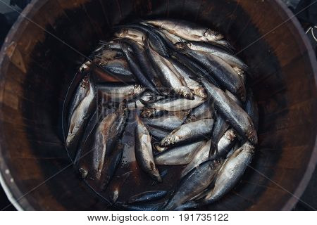 Herring in a wooden barrel - sea fish.