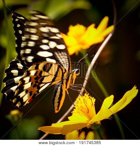 Butterfly feeding on a bright coloured flower