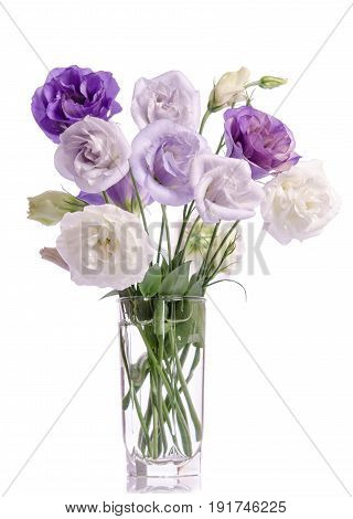 Bunch Of Violet, White And Violet Eustoma Flowers In Glass Vase Isolated On White