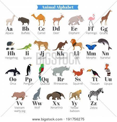 English vector alphabet for kids with cute wild animals near letters. Alphabet animals flamingo and giraffe, hedgehog and iguana, jaguar and kangaroo illustration