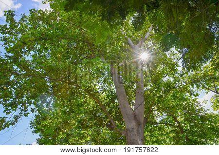 un through the trees pecleret,chamonix,haute savoie,france background