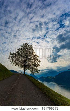 Tree With Bench With Mountains And Lake, Sky And Clouds