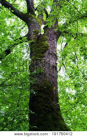 Picturesque moss on bark tree excursion in forest vertical