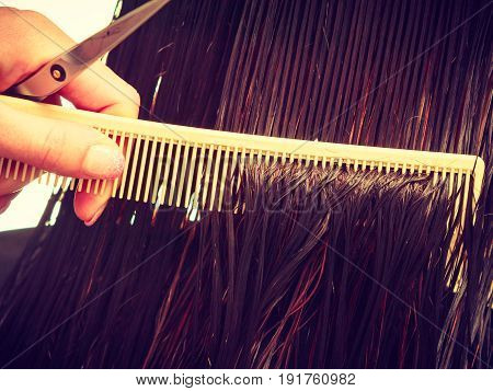 Cutting hair ends haircare concept. Closeup of dark wet hair comb and hairdressing scissors