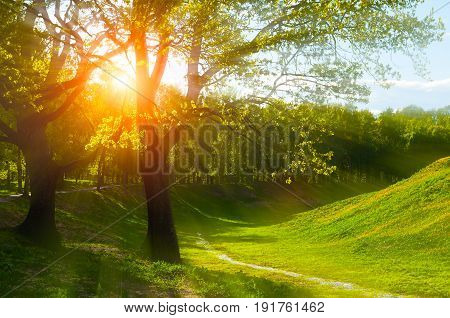 Summer landscape. Green trees on the hill at summer sunset - sunny colorful summer nature. Sunny summer park in the sunlight beams -summer landscape view. Sunny summer evening in the summer park