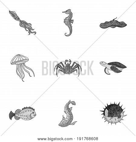 Marine and river inhabitants. Fish, whales, octopuses.Sea animals icon in set collection on monochrome style vector symbol stock web illustration.