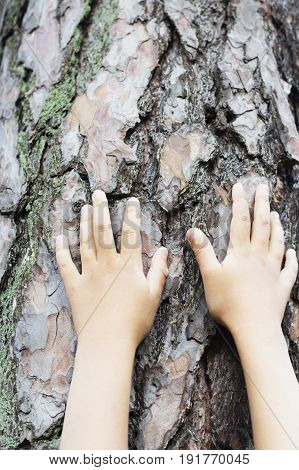 Female hands shape on a trunk of a tree. Great ecology concept