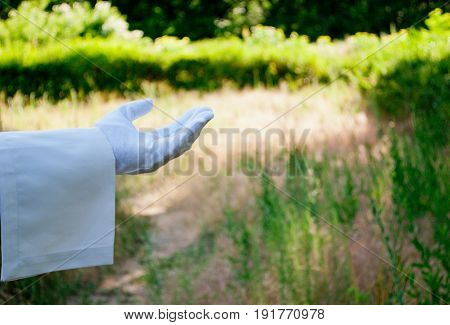 The waiter's hand in a white glove and with a white napkin shows with a finger a token of a request for a tip on the left on a green background of trees and bushes on a blurred background