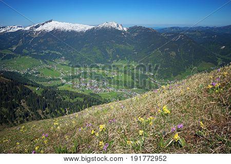 Alpine Flowers Meadow And View To Kleinwalsertal, Austria
