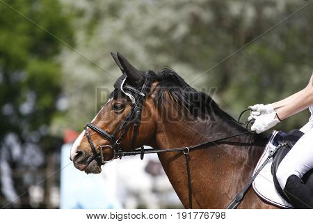 Unidentified jumping rider on horseback overcomes barriers. Closeup of show jumping horse during competition riding between obstacles