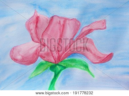 One pink magnolia on blu background, illustration painting watercolor.