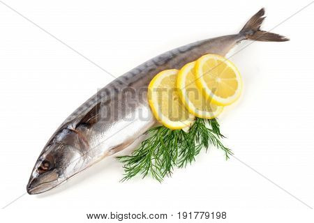 One fresh mackerel isolated on white background.