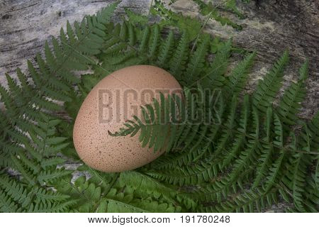 Speckled brown hen egg in woodland scene
