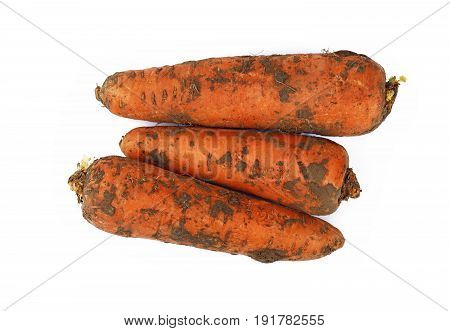 Carrot Dirty In Ground Close Up Isolated On White