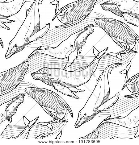 Graphic humpback whale seamless pattern. Sea creature on white background. Vector ocean mammal. Coloring book page design for adults and kids