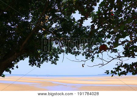 Beautiful beach on the summer under the shadow tree